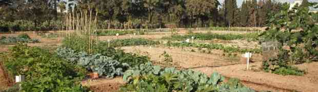 Calabria, l'orto bio scaccia la discarica